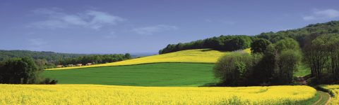 Wind für landwirtschaftliche Großbetriebe